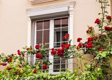 Window with roses Royalty Free Stock Photo