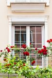 Window with roses Stock Images