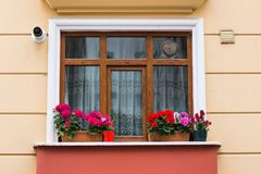 Window with roses Royalty Free Stock Image