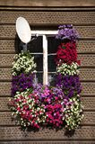 Window with the satellite. Aerial in thrickets of flowers Stock Photography