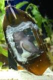 Window in shark egg Stock Image