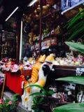 Window shopping. Kittens Royalty Free Stock Photo