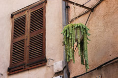 Window shutter and plant. Brown window shutter and green plant Stock Photography