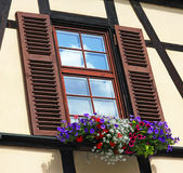 Window with shutters and box of different colorful flowers Stock Images