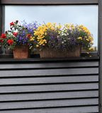 Window with shutters, decorated with flowers. Geneva, Switzerland. Stock Image