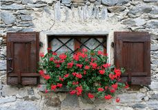 Window with shutters and flower Stock Photography