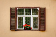 Window with shutters and flower Stock Image