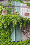Window with shutters and green ivy. On the stone wall Stock Photos