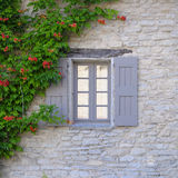 Window with shutters and vine  Stock Image
