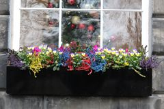 Window Sill Flowers. Colourful flowers on window ledge in Edinburgh royalty free stock photography
