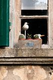 Window sill Tuscan farmhouse. Detail of a window of a Tuscan farmhouse stock photo