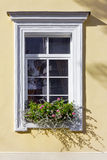 At a window stand flowers Royalty Free Stock Photos