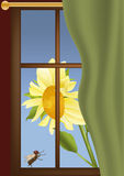 Window sunflower and a fly. Window a curtain royalty free illustration