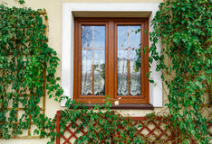Window surronded by wilted ivy Stock Images