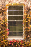 Window surrounded by ivy. A window framed by ivy bearing autumn colours Royalty Free Stock Photography