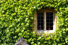 Window Surrounded By Ivy Royalty Free Stock Photos