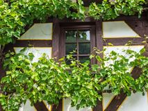 Window of a timbered house framed with grapevines.  Royalty Free Stock Images