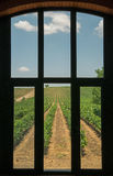Window to Vineyard Royalty Free Stock Images