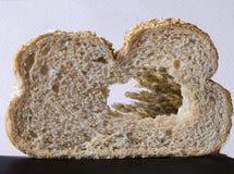 Window to wheat. Stock Image