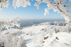 Window to the winter. View of winter forest between branche of snow Stock Photos
