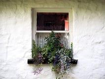 Window With Trailing Lobelia In Ireland Stock Photos