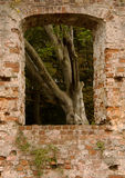 Window of Trojborg castle ruin near Tonder, Denmark. Detail of Trojborg castle ruin near Tonder, Denmark showing a window with a tree behind it stock photos