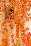 Window under autumn leafs Royalty Free Stock Photos