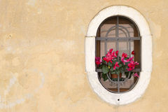 Window in Venice Royalty Free Stock Photo