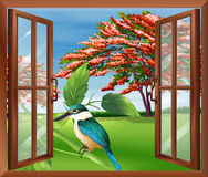 A window with a view of the bird Stock Photography