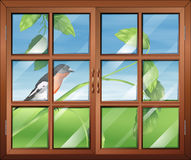 A window with a view of the bird Stock Photos