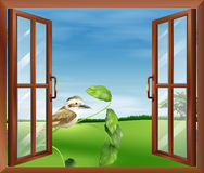 A window with a view of the bird outside Royalty Free Stock Photography