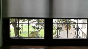 Window view inside - outside the wind blows. And move the branches of the tree stock footage
