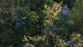 Window view. Trees` crowns with the first dried leaves in early autumn. There is a short but marvellous time in the autumn: the Golden autumn or Indian summer stock footage