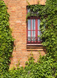 Window with vine Stock Photo