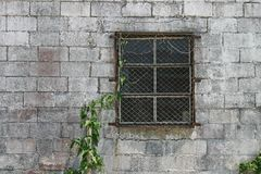 Window & Vine Stock Photos