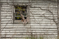 Window with vines Royalty Free Stock Image