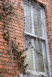 Window & Vines. Window of an abandoned building overgrown with vines Stock Photos