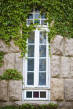 Window and vines Royalty Free Stock Image