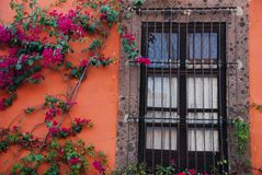 Window, wall and bougainvillea vine in Mexico Stock Photos