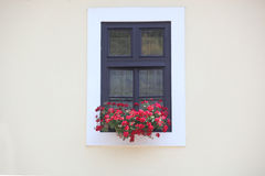 Window on the wall and flowers Stock Images