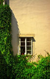 Window on wall with ivy Royalty Free Stock Photo