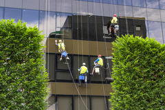 Window Washers. Four window washers working on a newly opened office building Stock Photos