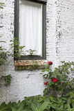 Window in white painted brick wall and red roses Stock Photography