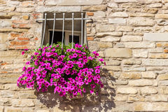 Window with white railings and fuchsia petunias. Rectangular square window with white railings and pots of fuchsia hanging petunias royalty free stock images