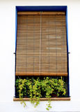 Window with wooden shutter and plants Royalty Free Stock Photos
