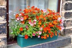 Windowbox Colourful con i fiori di nemesia Fotografia Stock Libera da Diritti