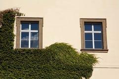 Windows和常春藤在老门面 免版税库存图片