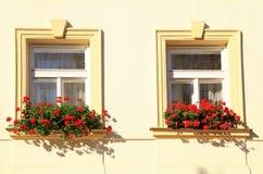 Windows和花箱子,布拉格 免版税库存照片