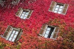 Windows喜欢在五颜六色的墙壁上的蝴蝶 免版税库存图片