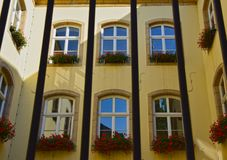 Windows用在公寓单元的大竺葵花装饰了 库存照片